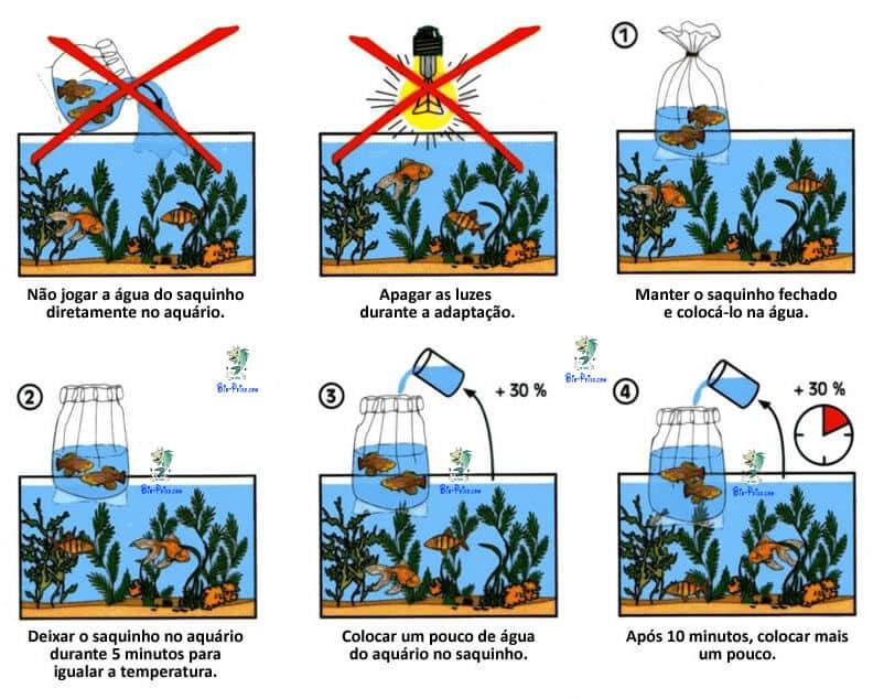 A correcta climatização dos peixes no aquario