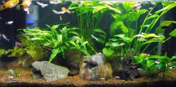 tipo de aquário comun