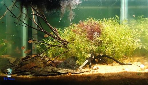 tipo de aquário de biótipo