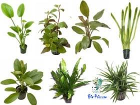 As plantas de aquário