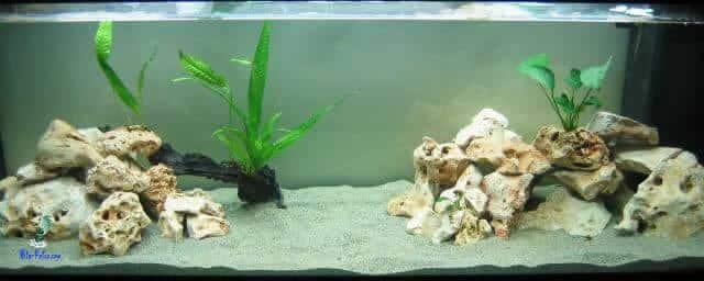 aquario Biótipo para Haplochromis e Aulonocaras
