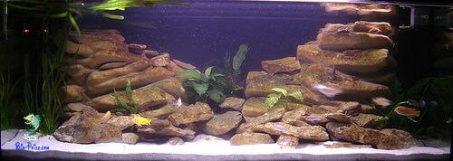 aquario Biotipo para Mbunas
