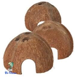 A casca de coco serve para decorar ou para criar refúgios no aquário