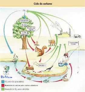Ciclo do Carbono - biogeoquímico