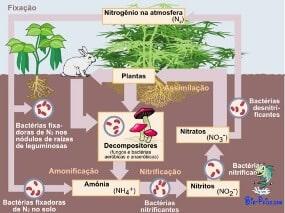 Ciclo do Nitrogénio - biogeoquímico