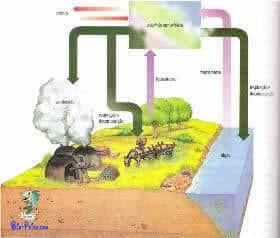 Ciclo do Oxigénio - biogeoquímico