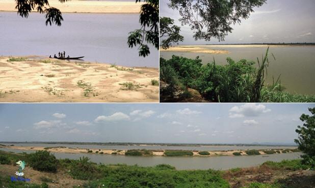 Delta do Rio Níger, origem dos Krivensis