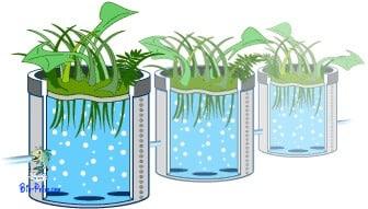 Filtro de algas e plantas