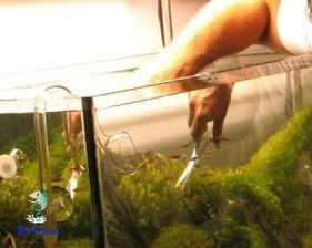 Manutenção das plantas aquário