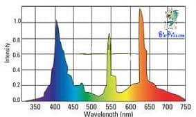 O espectro luminoso da iluminação do aquário