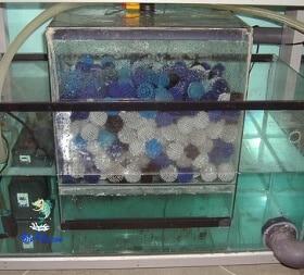 Os Filtros secos-húmidos de aquário
