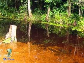 Elementos químicos da água do rio e de lagoas tropicais