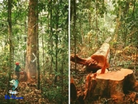 Calamidade na amazonia devastada
