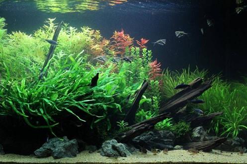 Aspecto de um aquário de Biótipo Amazónico