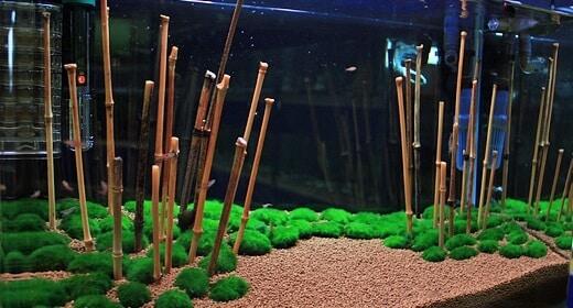 Aquários asiáticos decorado com Bambu e musgo