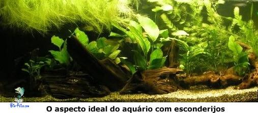 aquário dos Krivensis