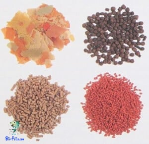tipo de alimento comida seca - flocos - granulados