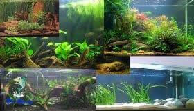 É muito importante ter algum conhecimento básico para fazer um layout do seu aquário