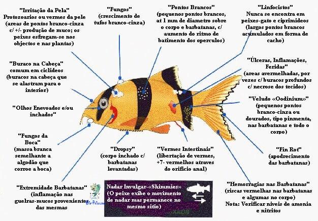 Como identificar as doenças dos peixe