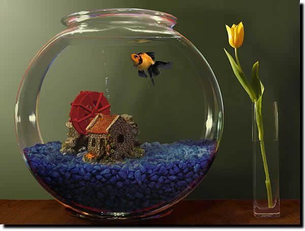 Goldfish Aquarium é um protector de tela