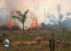 Calamidade na amazonia queimada