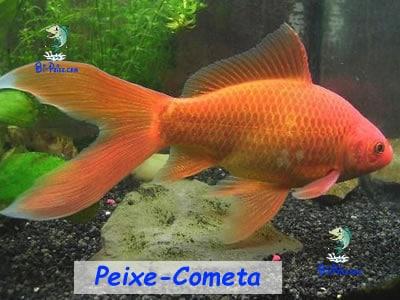 peixe-cometa lago