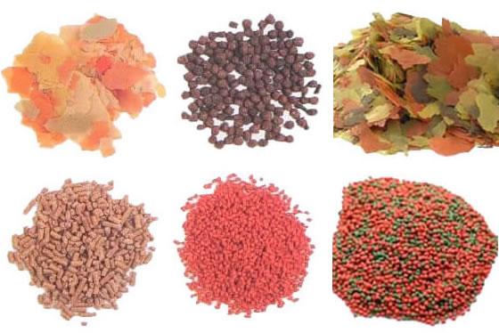 Como escolher o tipo de alimento, flocos secos ou granulados