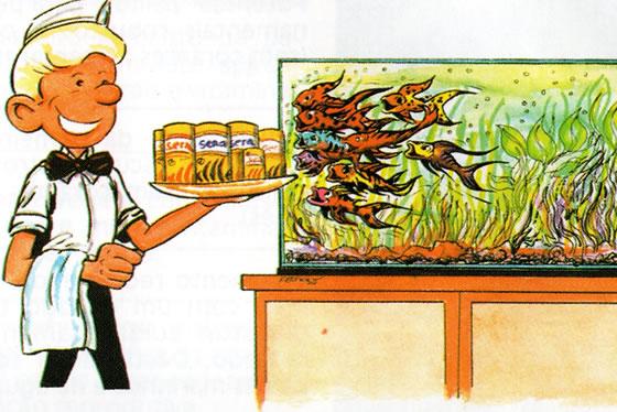 alimentar os seus peixes